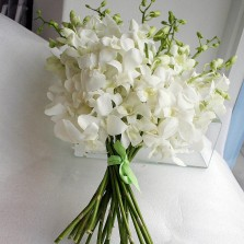 Pure White Orchids