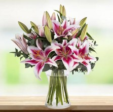 Pink Beauty in A Vase