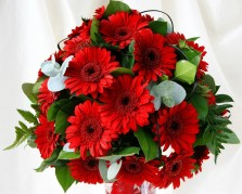 Beautiful Red Gerberas
