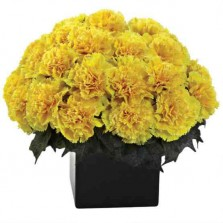 Yellow Carnations In A Vase