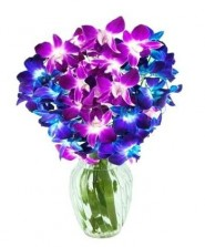 Purple N Blue Orchids In A Vase