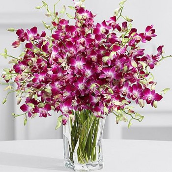 Orchid in A Vase